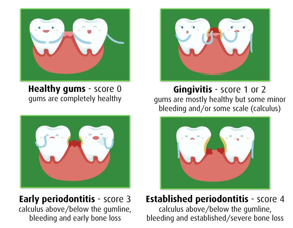 Gum Score Card
